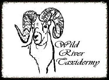 Wild River Taxidermy